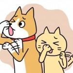 0727犬猫臭い-e1501199823106-300x261